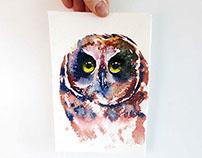 Mini portrait of the short eared owl