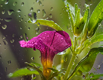 RainFlowers