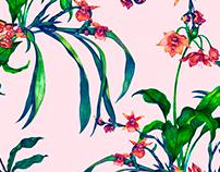Estampa Orchids