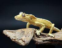 Crested Gecko Paper Art