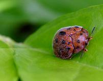 Fotografía de insectos 2011