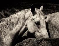 Horseville