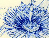 Botanical Sketches, Plans, and Illustrations