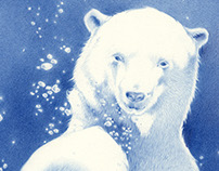 POLAR BEAR | pencil illustration