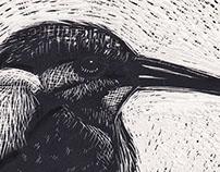 Scraperboard: Kingfisher