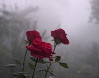 A ROSE FELT MEMORY