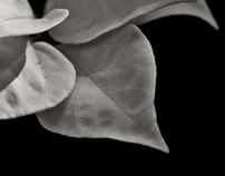 Nature Details