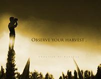 Observe your harvest