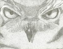 Stipple Drawings
