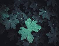Sweety Leaves