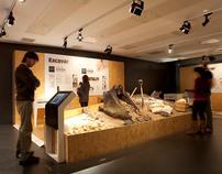 Interactive Paleontology Museum