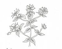 Apothecary Herb Pen Sketches 2003