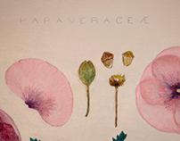 Tríptico Herbario