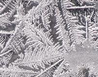 Condensation Ice