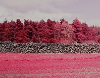 Colour Infrared Film