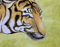 Tiger (watercolour)
