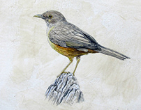 Birds | Pássaros