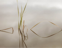 grasses in the pond