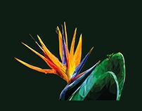 Low Poly Art - Flower