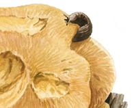 Galician Mushrooms