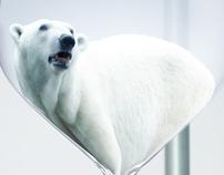 Polar Bear Campaign