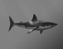 Drawing of a great white shark done with Cintiq 27QHDT