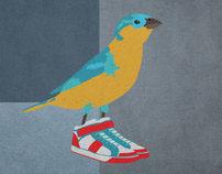 House Sparrow (The Baller)