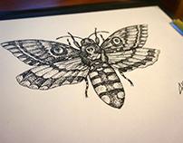 Moth dotwork