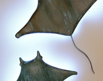 Manta Ray Sconces
