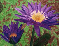 Illustration - Water Lily
