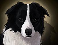 dog portrait Cloë commission