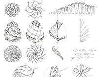 Scientific Illustrations