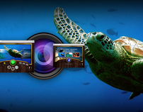 Meet Me In Tahiti / Website Design