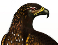 Aguila / Project Faunas