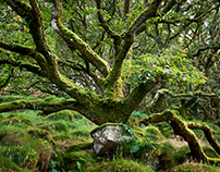 Ancient Woodland #1
