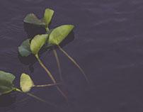 WINTER LILIES // Lake Washington