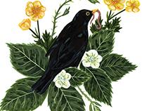 blackbird + bramble