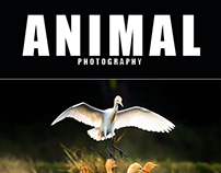 25 Animals Photography Lightroom Preset