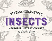 Insects – Vintage Illustrations