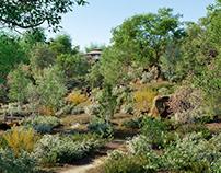 Globeplants bundle 19 : Temperate Plants