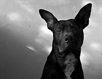 Noir Vito