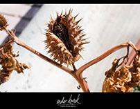 Flowers and Seeds - Çiçekler ve Tohumlar