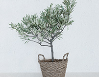 3d model olive tree in a basket.