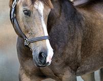 American Quarter Horse - Chip, owner Nancy Jenkins