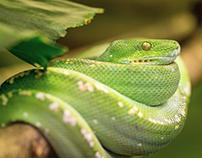 Biophidic - Centro de Investigación de Reptiles