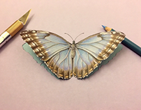 3D Blue Butterfly Cutout Paper Art Drawing