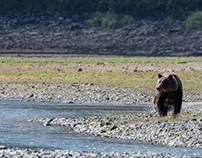 Alaska, Mother grizzly and cub fishing