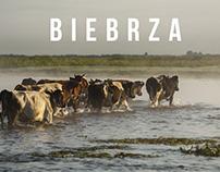 Biebrza River. Poland