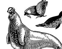 """Linocut Illustrations for Edgar Poe`s """" PYM"""" , PART V"""