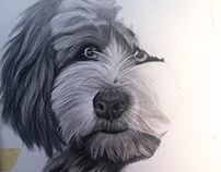 ILLUSTRATIONS - Freelance Dog Illustrations